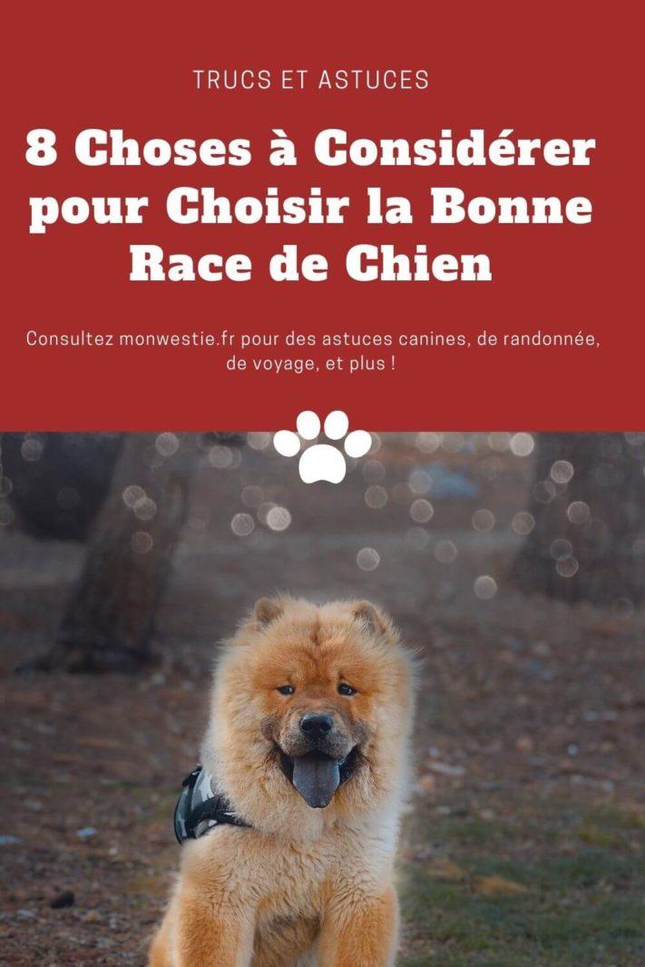 Comment choisir la race de son chien