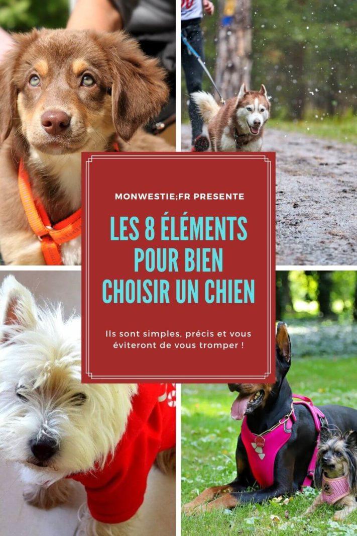 8 thèmes à prendre en compte pour bien choisir sa race de chien