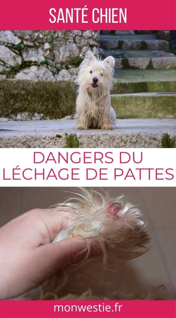 Dangers du léchage de pattes