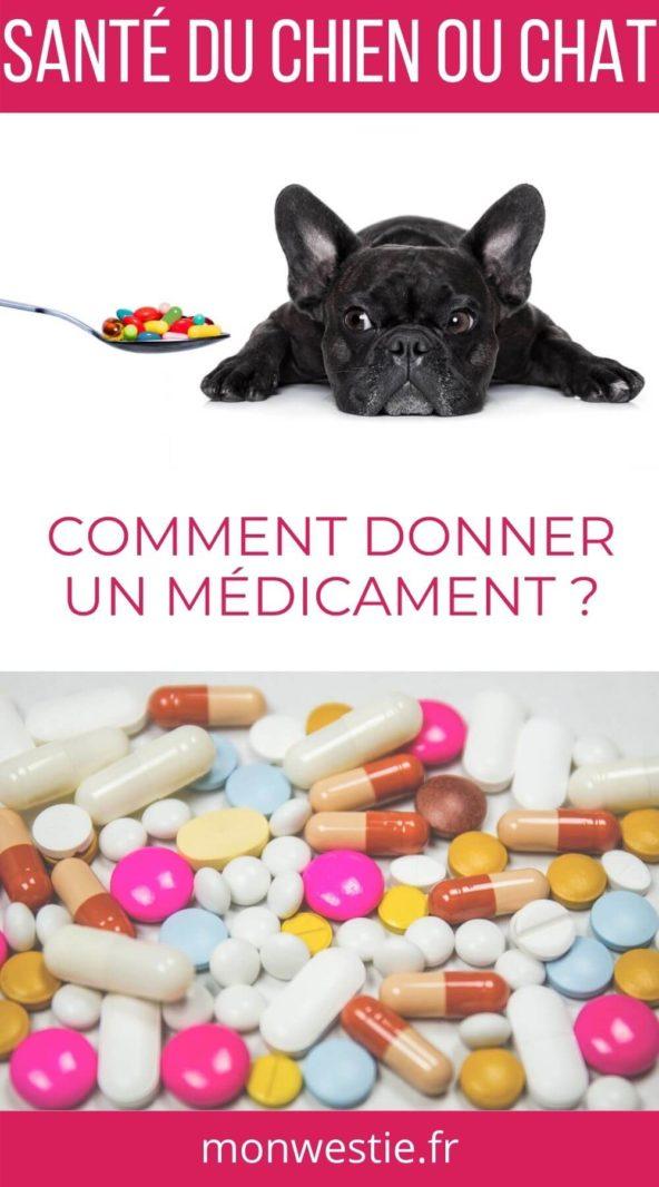 Bulldog français avec des médicaments