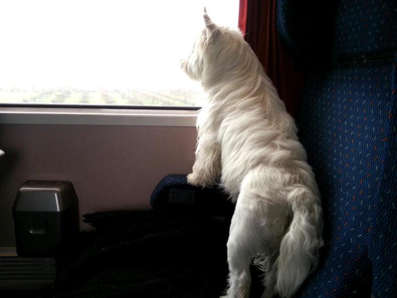 Comment Voyager en Train avec un Chien en France et en Europe ?