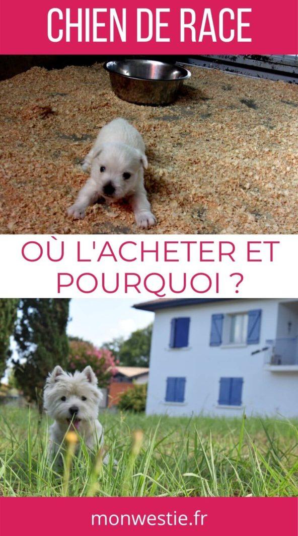Où acheter un chien et pourquoi