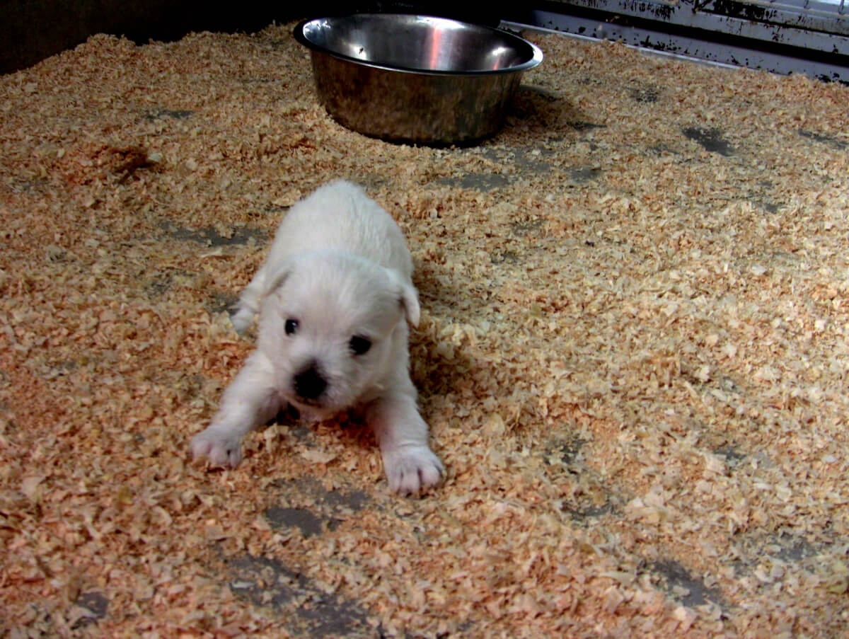 Where to Buy a Dog – How to Find Dog Breeders