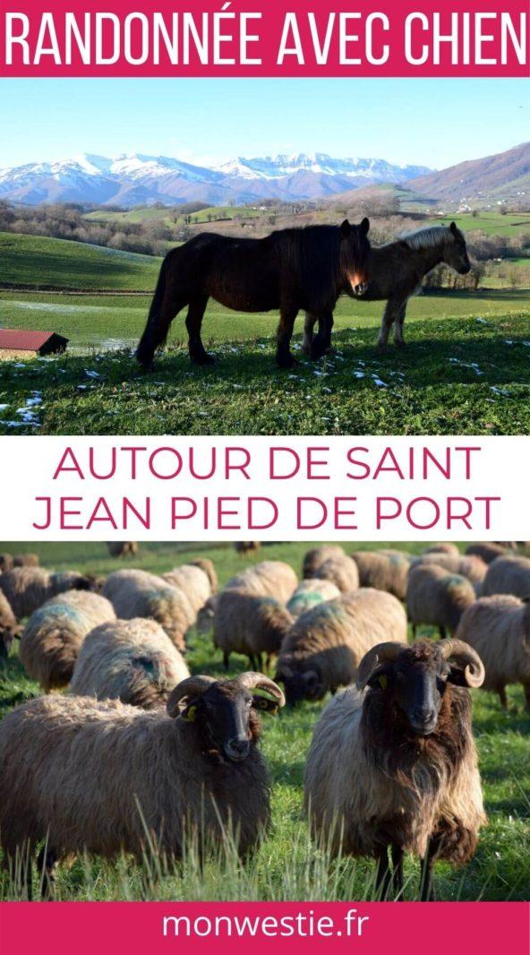 Randonnée avec chien autour de Saint Jean Pied de Port