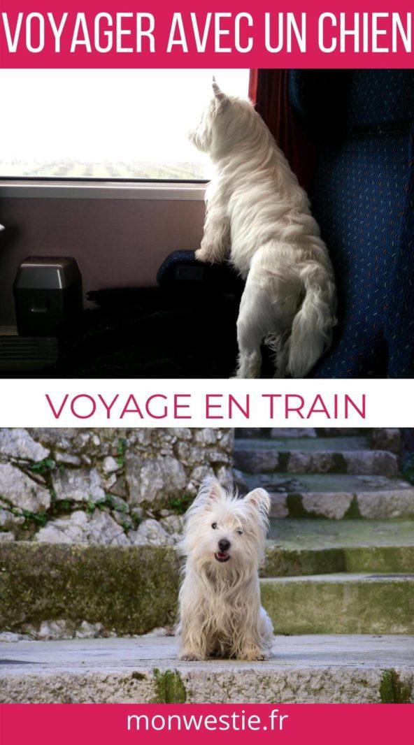 Westie Jahan dans un train et en voyage