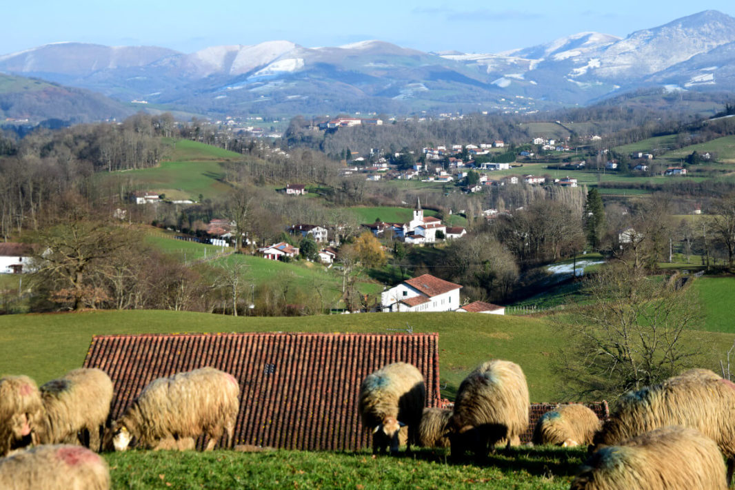 Sheeps and snowy Basque mountains