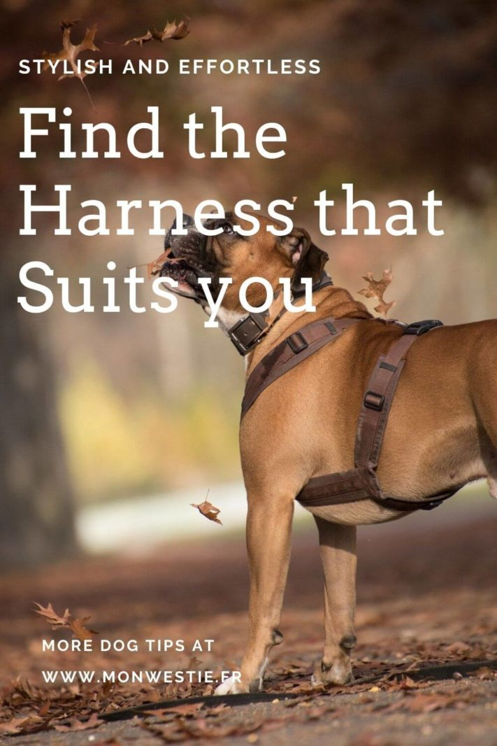 Find the harness that suits you