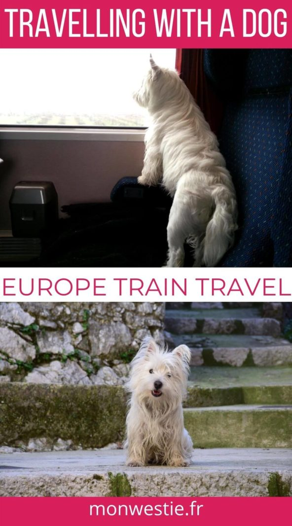 Westie Jahan travelling by train and in Saint Paul de Vence