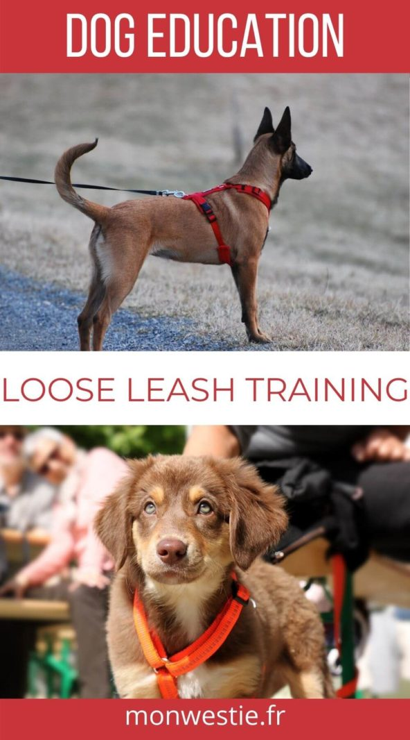 Two dogs wearing a leash for training