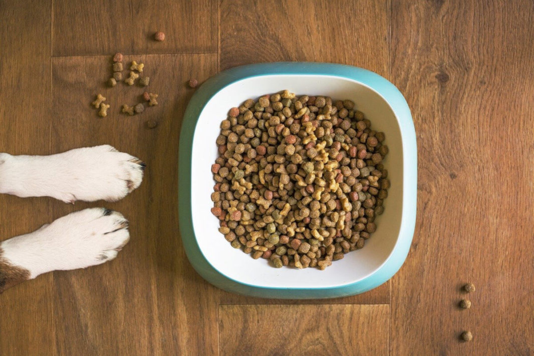 Kibble in a dog bowl and paws