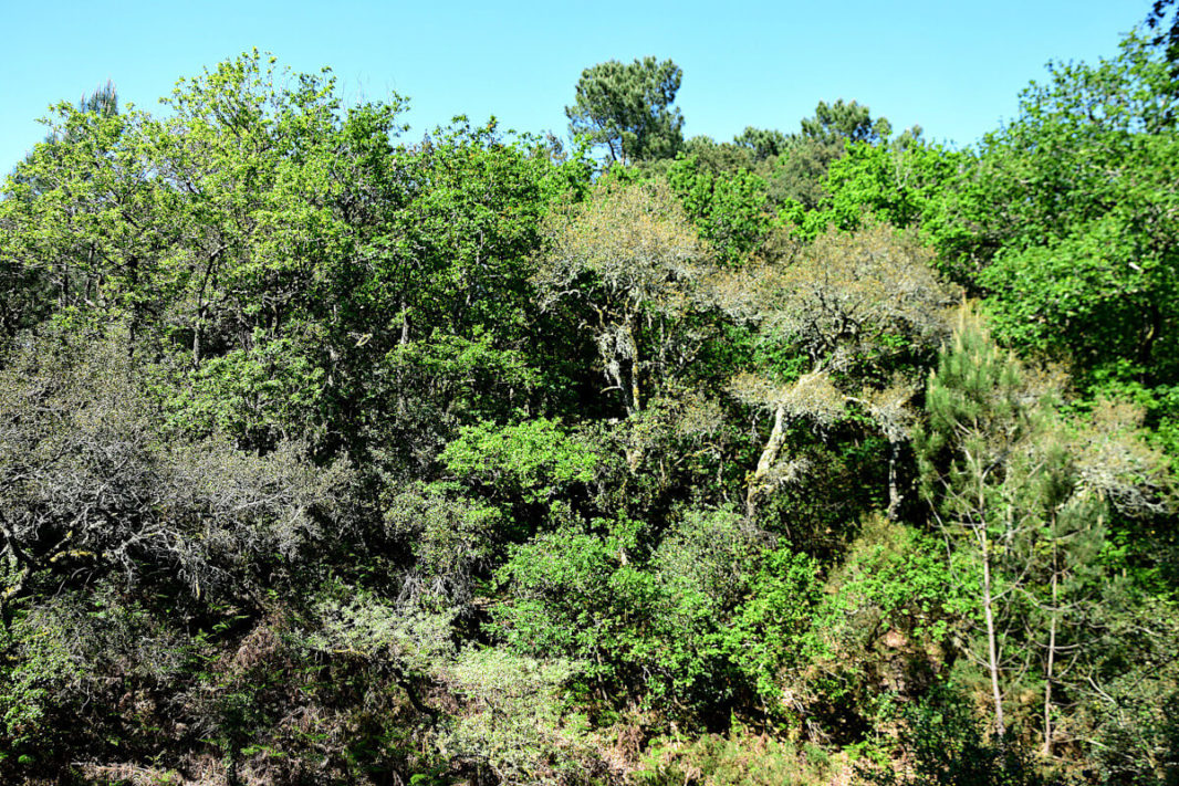 different species of trees resembling a primary forest