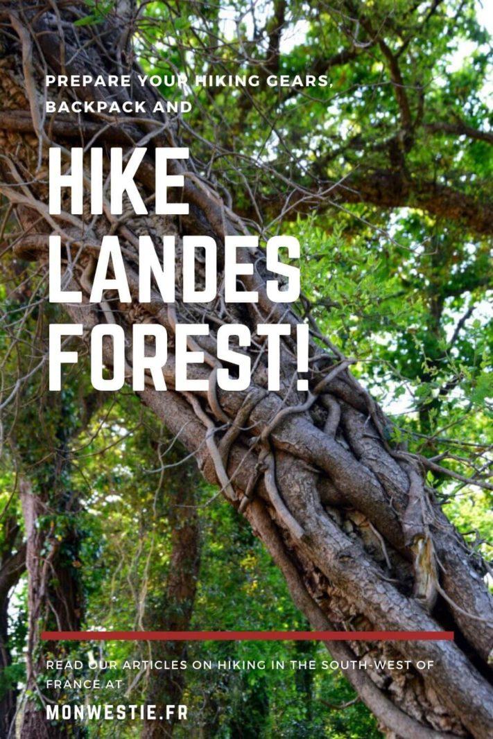 Capbreton Landes Forest Hike