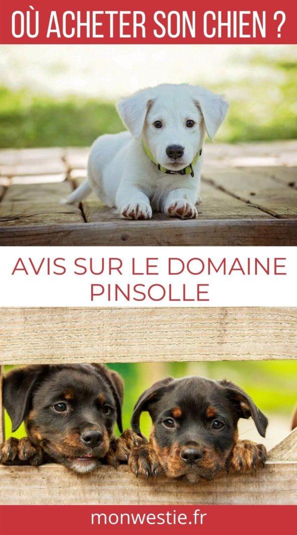 Avis élevage chien Domaine Pinsolle
